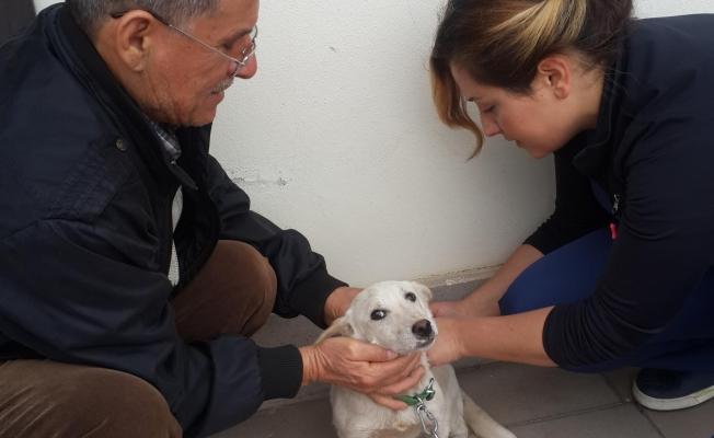 Kepez Belediyesi , sokak hayvanlarını sokakta bırakmıyor