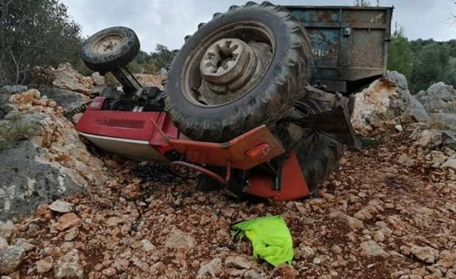 Zeytin yüklü traktör devrildi: 1 yaralı