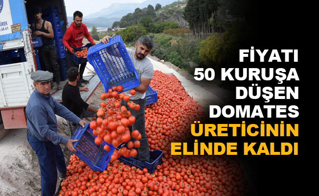 Fiyatı 50 kuruşa düşen domates üreticinin elinde kaldı