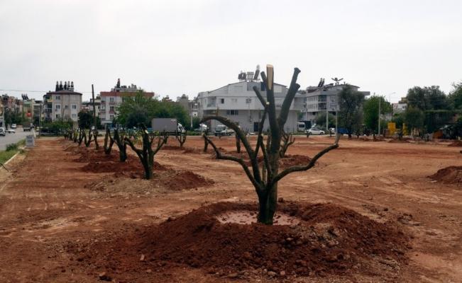 Bir portakal bahçesi de Mehmet Akif Ersoy mahallesine