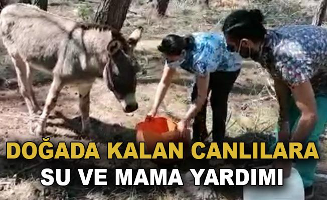 Eşek ve sokak hayvanlarına su ve mama yardımı