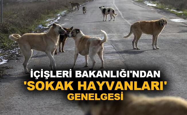 İçişleri Bakanlığı'ndan 'Sokak Hayvanları' genelgesi