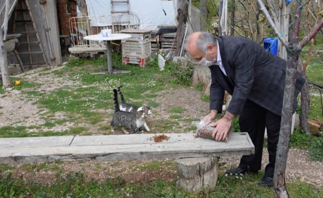 Yaylada yazlıkçıların bırakıp gittiği hayvanları beslediler