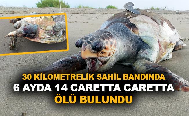 Balıkçı misinasına dolanan Caretta telef oldu
