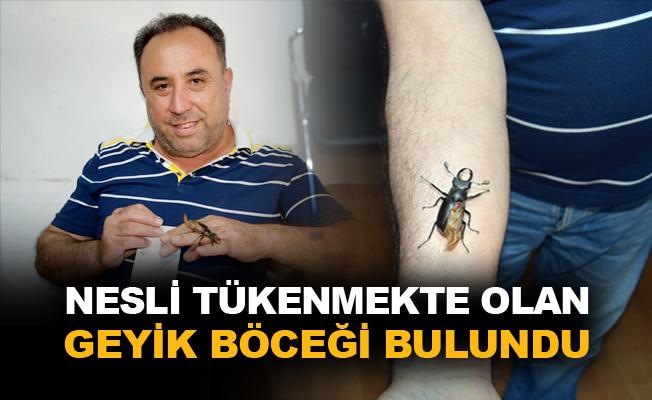 Geyik böceğinin bir kanadının kırık olduğu tespit edildi