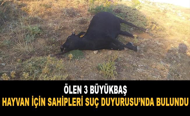 Ölen 3 büyükbaş hayvan için sahipleri suç duyurusunda bulundu