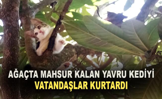Ağaçta mahsur kalan yavru kediyi vatandaşlar kurtardı.