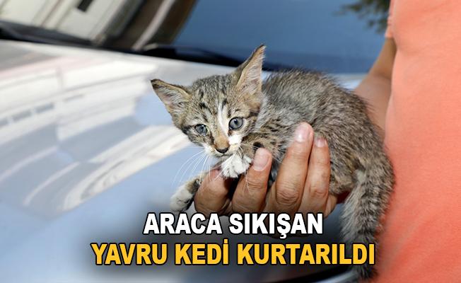 Antalya'da araca sıkışan yavru kedi kurtarıldı
