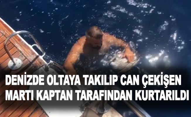 Denizde oltaya takılıp can çekişen martı kaptan tarafından kurtarıldı