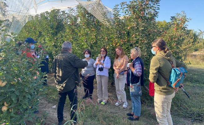 Alanya'da yaşayan Rus turistler elma hasadına katıldı