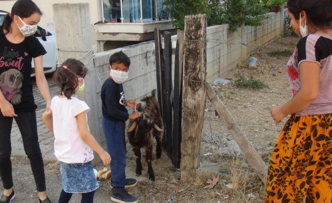 Sokakta buldukları keçiyi iple bağlayıp polisi aradılar