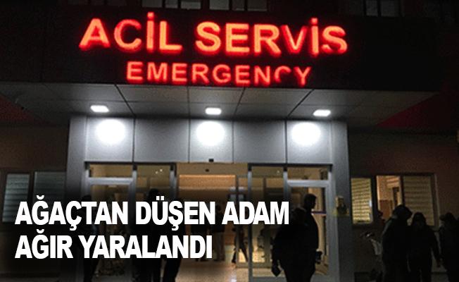 Alanya'da ağaçtan düşen adam ağır yaralandı