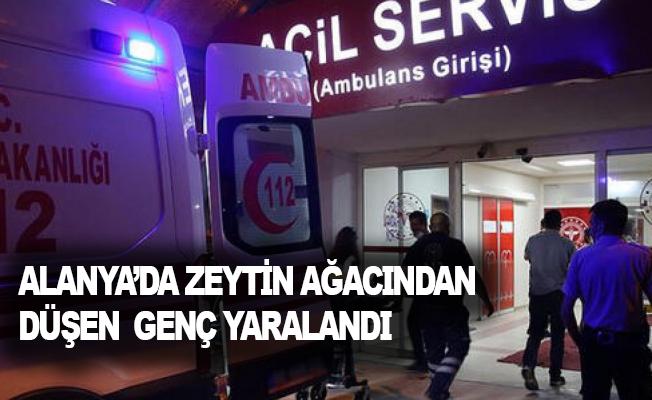 Alanya'da zeytin ağacından düşen genç yaralandı