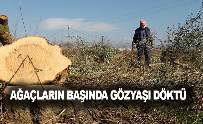 """""""Babamın emeklerine nasıl kıydınız"""" diye kesilen ağaçların başında gözyaşı döktü"""