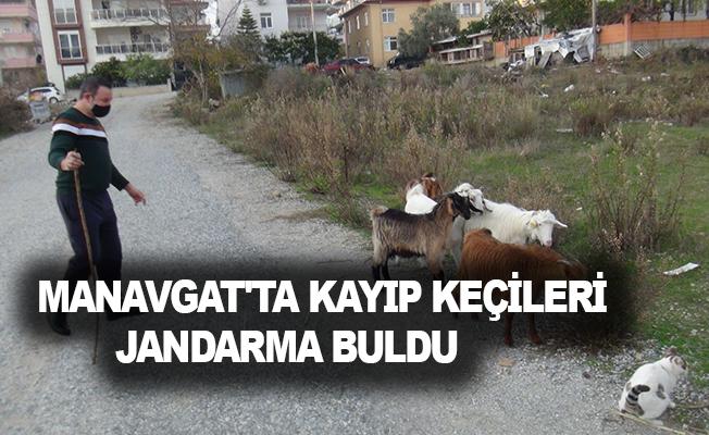 Manavgat'ta kayıp keçileri jandarma buldu