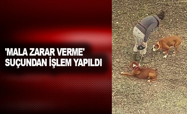 Sopayla köpeklerini döven kadına, 'mala zarar verme' suçundan işlem yapıldı