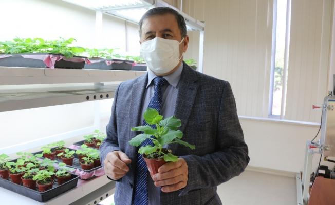 Akdeniz Üniversitesinden heyecanlandıran ilaç ve aşı adayı açıklaması