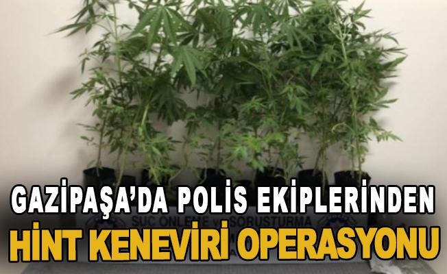 Gazipaşa'da polis ekiplerinden hint keneviri operasyonu
