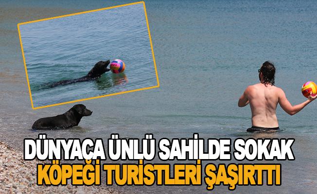 Dünyaca ünlü sahilde sokak köpeği turistleri şaşırttı