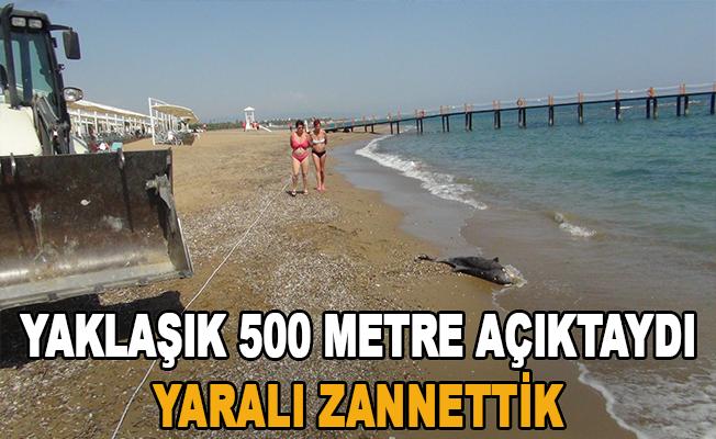 Açıkta bulunan ölü yunus balığı sahile çıkartıldı
