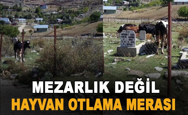 Mezarlık değil hayvan otlama merası