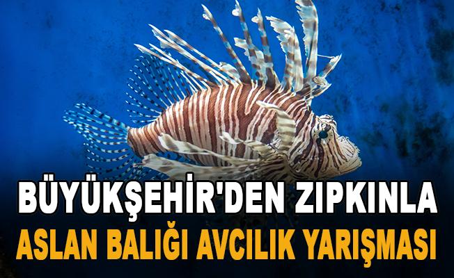 Büyükşehir'den zıpkınla Aslan Balığı Avcılık Yarışması