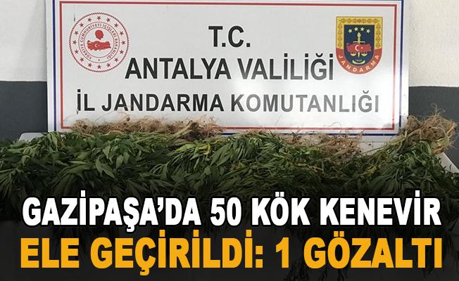 Gazipaşa'da 50 kök kenevir ele geçirildi: 1 gözaltı
