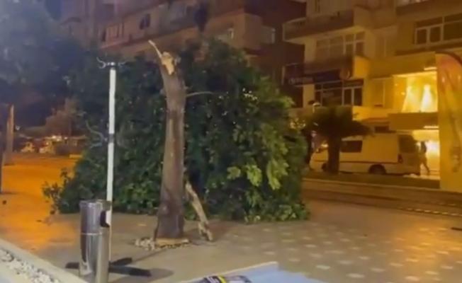Gövdesi çürüyen ağaç kaldırıma devrildi, bir vatandaş saniyelerle altında kalmaktan kurtuldu