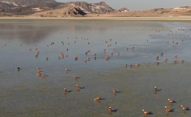 Su seviyesi artan Yarışlı Göl'e kuş akını