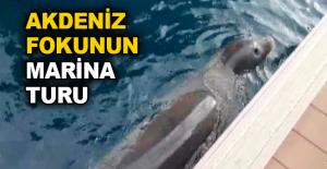 Akdeniz Fokunun marina turu
