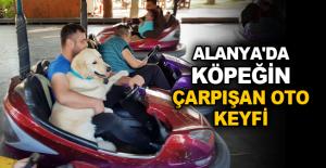 Alanya'da köpeğin çarpışan oto keyfi