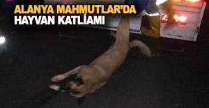 Alanya Mahmutlar#039;da hayvan katliamı