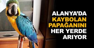 Alanya'da kaybolan Papağanını her...