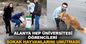 Alanya HEP Üniversitesi öğrencileri sokak hayvanlarını unutmadı