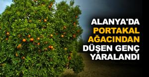 Alanya'da portakal ağacından düşen genç yaralandı