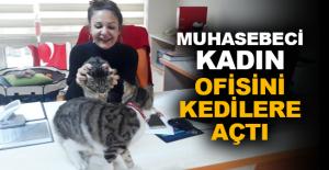 Muhasebeci kadın ofisini kedilere açtı
