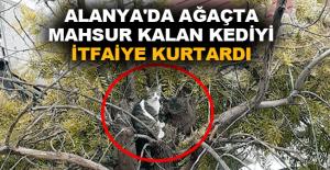 Alanya'da ağaçta mahsur kalan kediyi, itfaiye kurtardı