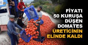 Fiyatı 50 kuruşa düşen domates...