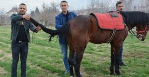 Kuyruğu kopan at için 2 buçuk saatlik yeni kuyruk operasyonu