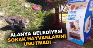 Alanya Belediyesi sokak hayvanlarını unutmadı