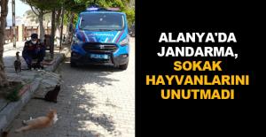 Alanya'da Jandarma, sokak hayvanlarını unutmadı