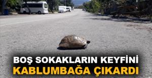 Boş sokakların keyfini kaplumbağa çıkardı