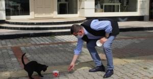 Mustafa Türkdoğan sokak hayvanlarını besledi