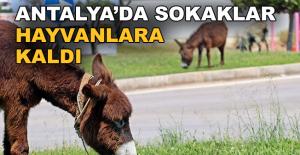 Antalya'da sokaklar hayvanlara kaldı