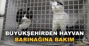 Büyükşehir'den Hayvan Barınağı'na bakım
