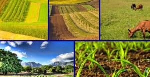 Online 'Sürdürülebilir Tarım ve Gıda' paneli düzenlenecek
