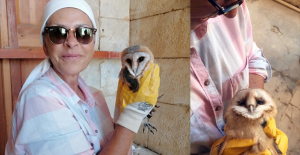 Yavru peçeli baykuş koruma altına alındı