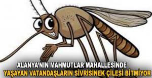 Alanya'nın Mahmutlar Mahallesinde yaşayan vatandaşların sivrisinek çilesi bitmiyor.