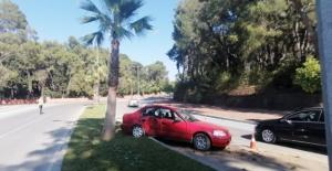 Seyir halindeki otomobil palmiyeye çarptı: 3 yaralı