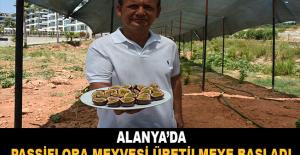 Alanya'da passiflora meyvesi üretilmeye başladı